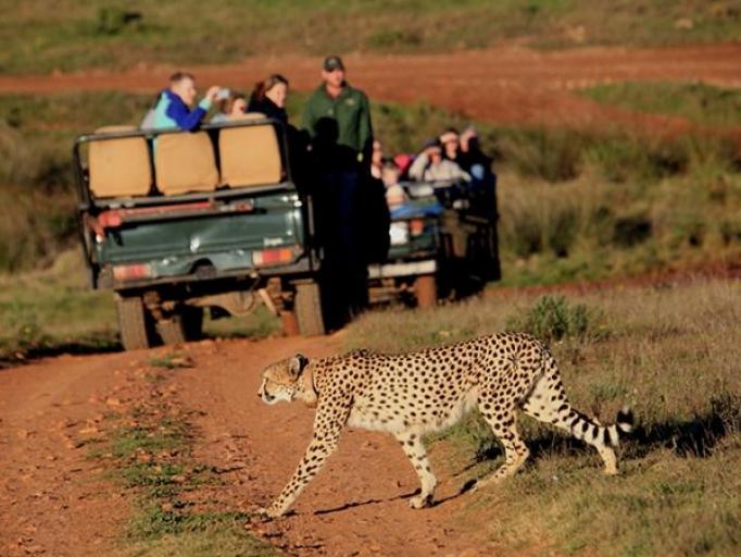 Safari dienvidāfrikā